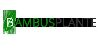 Plante Bambus | Amenajare gradini comerciale si rezidentiale